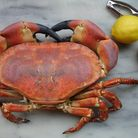 Freshly boiled crab goes well in a souffle