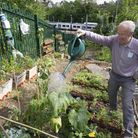 Howard Williams of The Friends of Ally Pally station watering The Bedford Rose Garden