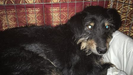 Zaki was reunited with his owner after three-and-a-half months. Photo: Lisa Colby.