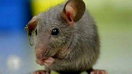 Mouse droppings were found in three restaurants between January and March, the reports revealed They