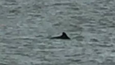 A mystery creature was spotted off the Lowestoft coast. Photo: Ben Darling.
