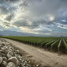 Zuccardi�s Uco Valley vines and Sebasti�n Zuccardi and the company�s Uco Valley winery