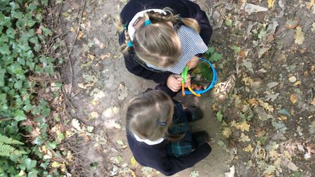Pupils enjoy collecting leaves and foraging for berries