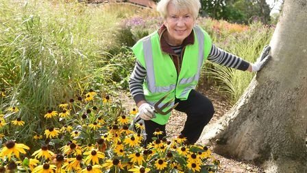 Nicholas Everitt Park has won a Gold award in the Anglia in Bloom small park category.Park volunteer