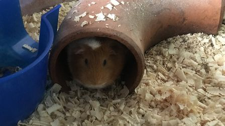 One of the current residents at Pets Corner in Oulton Broad, which has new owners. Picture: Neil Did
