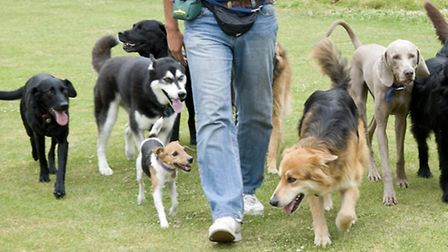 Brent Council may tighten restrictions on dog walkers