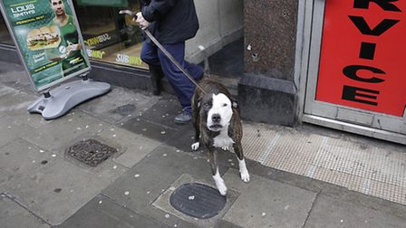 A suspected dangerous dog was seized by officers (Pic credit:Jjan Nevil)