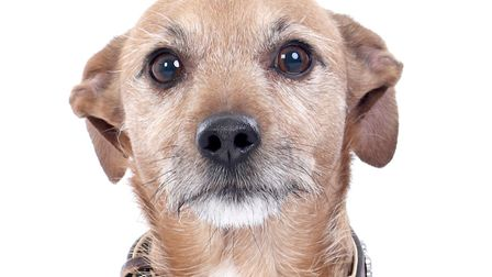 Scooby previously came third in the Pets on Parade dogs competition. Picture: Picture Studios