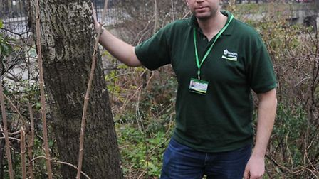 Islington Council officer Grayham Tindal with the tree that was targeted in Thornhilll Bridge Commun