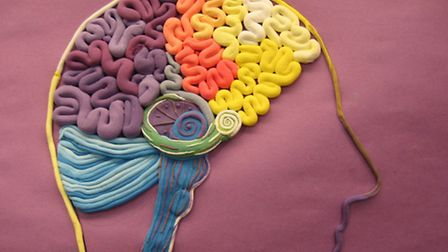 Visitors can help creat a map of the brain