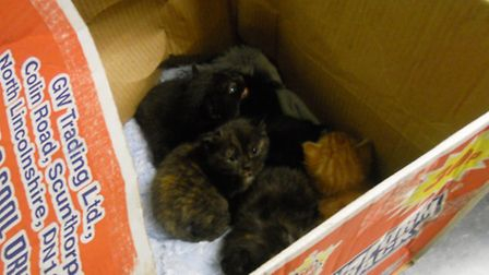 These kittens were cruelly dumped in Westboourne Park