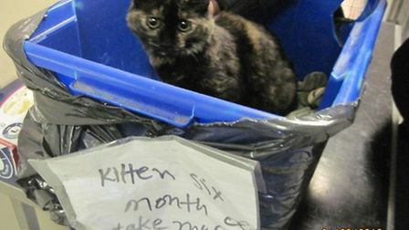 Six-month-old kitten was found dumped in White City