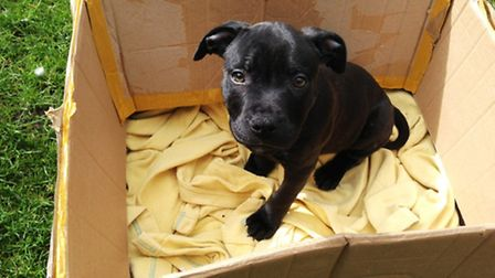 This puppy was found dumped on Tuesday morning