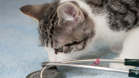 The Mayhew are calling for owners to vaccinate their pets