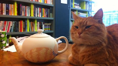 A tea pot of Bob cat will go on sale this week