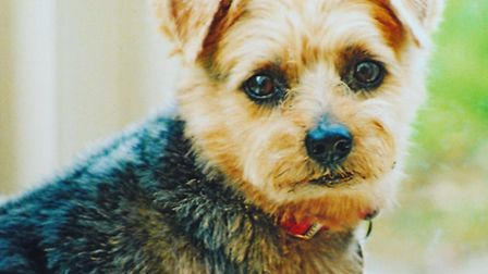Archie, who inspired the canine character of Archie in hit children's novel Artichoke Hearts, was st