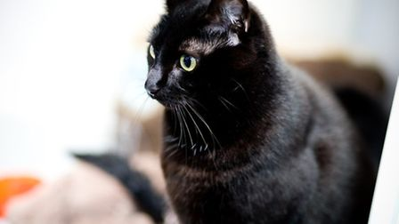 A quarter of the cats in The Mayhew are black like Maisie