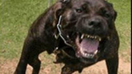 Mary Khan has been charged in connection with a dog attack (Stock photo)
