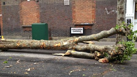 The tree fell on the pavement on Harlesden Gardens