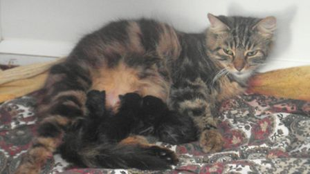Darcy and her kittens need a new home