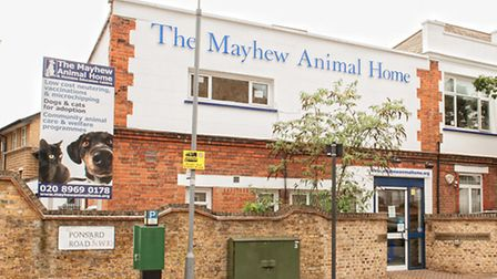 The Mayhew Animal Home is struggling to cope with increase in dumped cats