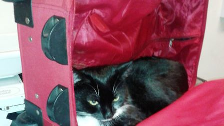 Panda was found zipped up in a suitcase, dumped and left to die