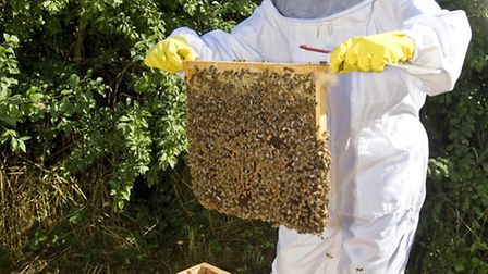 Brent Cross is home to bee colonies