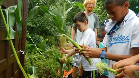 Children and families enjoy the frieghtliners farm fun day