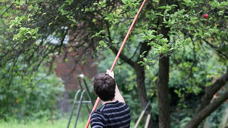 Hard to reach fruit will never be wasted again with this telescopic picking tool