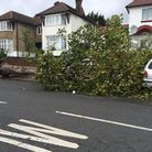 A fallen tree in Dollis Hill Lane hits a parked car (Pic credit: Twitter@radicalradish)