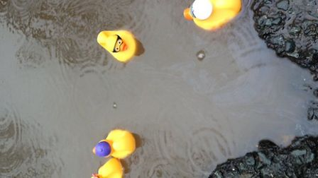Rubber ducks take the plunge in a Highbury hole