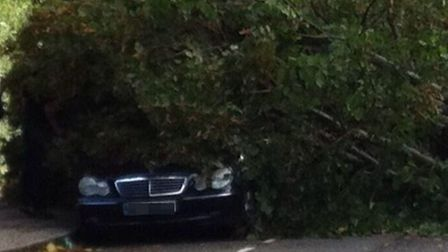 This Mercedes has been crushed by a fallen tree in St Paul's Avenue in Willesden