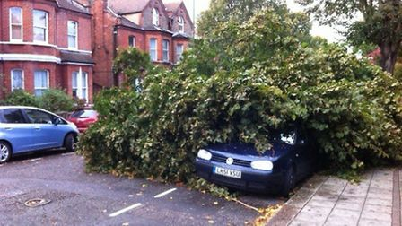 Felled tree in St Paul's Avenue, Willesden, landed on two cars (Pic credit: Ben Pearce)