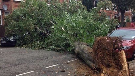 Uprooted tree in Willesden (Pic credit: Twitter@MikeReed30)