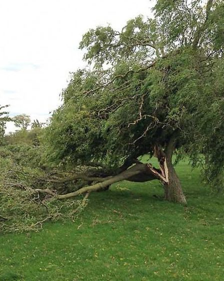 Several trees in Preston Park in Wembley were damaged by St Jude today (Pic credit: Twitter@SKPPRA)