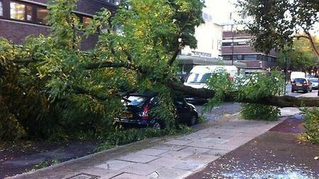 A tree has crushed a car in Spencer Street. Pic: @nic_southworth