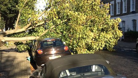 One of the trees fell on a car in Axminster Road