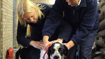 Get your dog microchipped for free on January 7