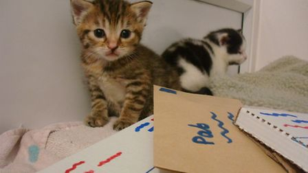 Two of the four kittens found with their mum by Royal Mail workers