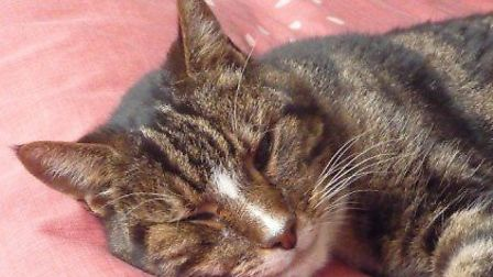 Nick is a 12-year-old stray who was found by a member of staff from The Mayhew.