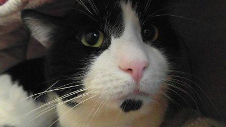 Sinbad was found abandoned in a flat for two weeks and although someone was feeding him he was left