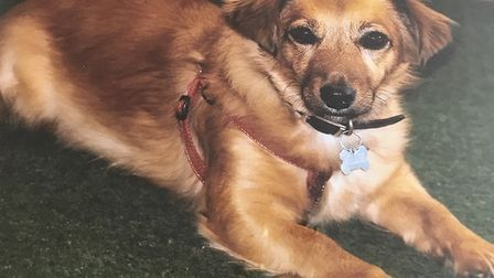 Shirley Patterson's dog, Millie, died following a violent attack by another dog in Carlton Colville.