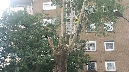 The council have sent workers to cut back the tree in Donnington Road (Pic credit: Twitter@Joaocoron