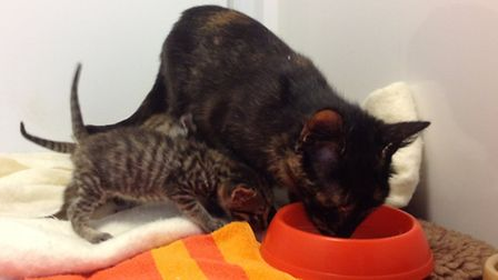 Daisy is a surrogate mother to Snuggle Bear, Kitten Bear and Bozo
