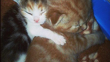 Two of the kittens cuddle together