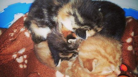 A totol of 10 kittens ended up in The Mayhew