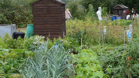 Waiting times for allotments have halved in Brent