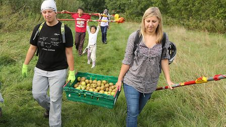 Fruit harvesting groups in Brent joined forces for their biggest challenge (Pic credit: Jonathan Gol