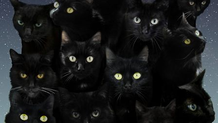 The Mayhew is urging more people to adopt a black cat
