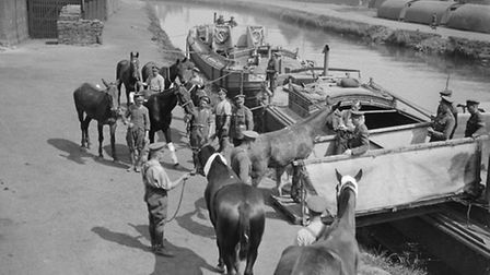 On The Western Front horses being loaded onto a barge Pic: Imperial War Museum.